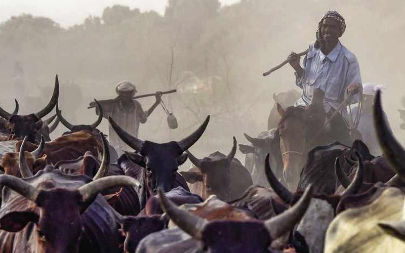 Tchad : Modernisation et industrialisation de l'élevage