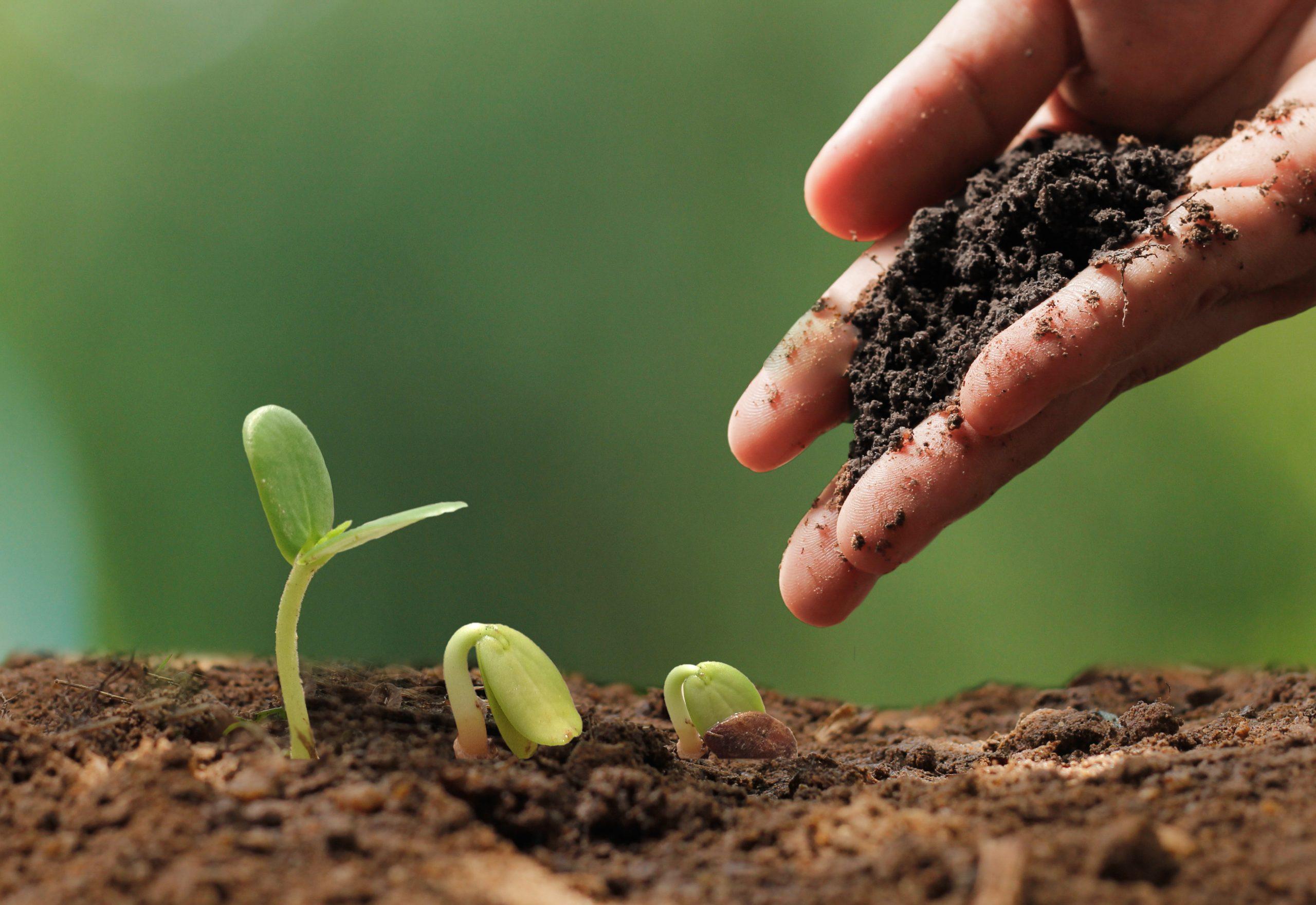 Afrique: Le temps de la transition vers l'agroécologie